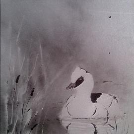 Morčák bílý