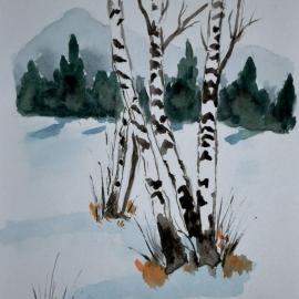 Břízky v zimě