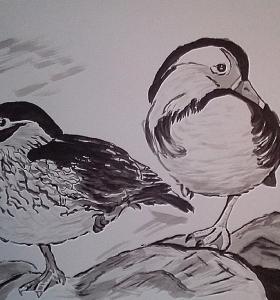 Párek kachniček mandarínských