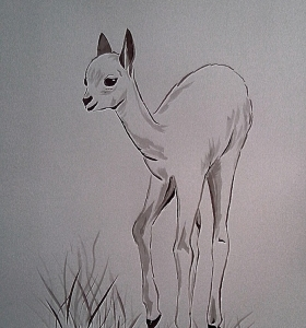 Mladá vikuňa